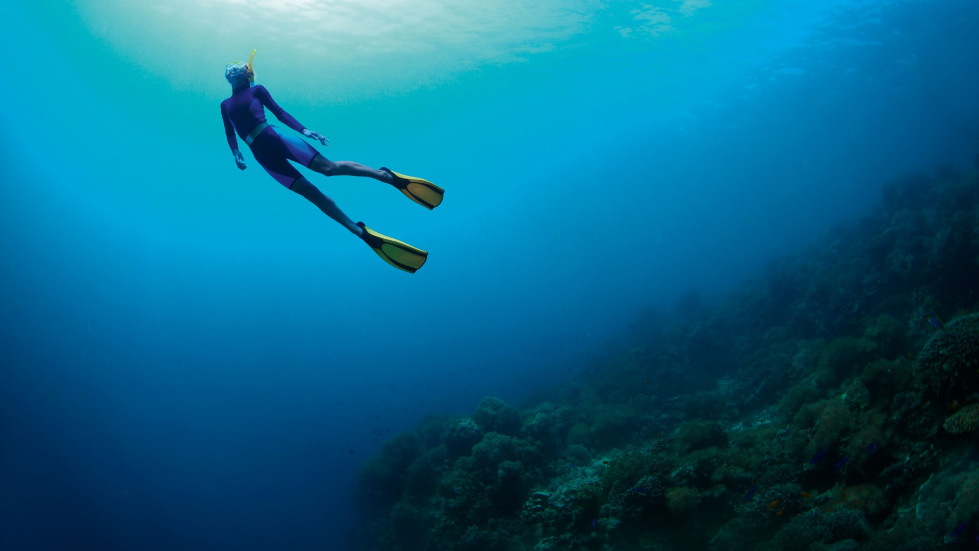 Taking The Plunge: Free Diving In The Caribbean