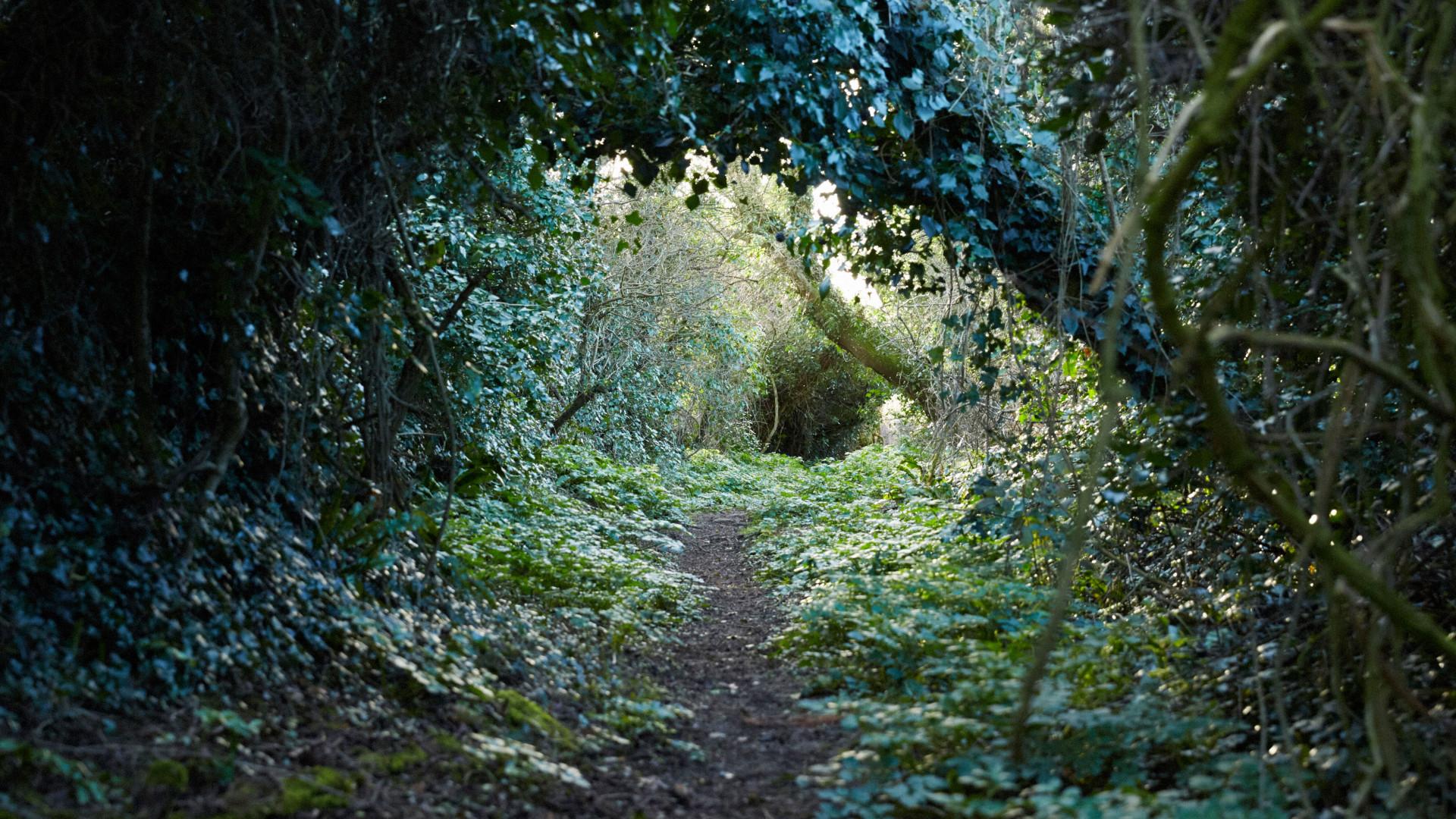 Porthilly Spirit woodland