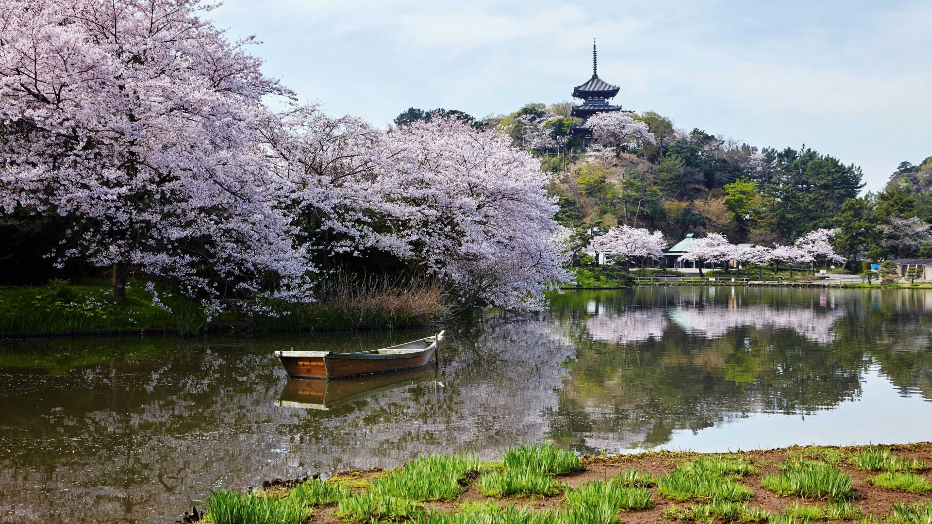 Japan Rugby World Cup 2019p: Yokohama's historic Sankeien garden