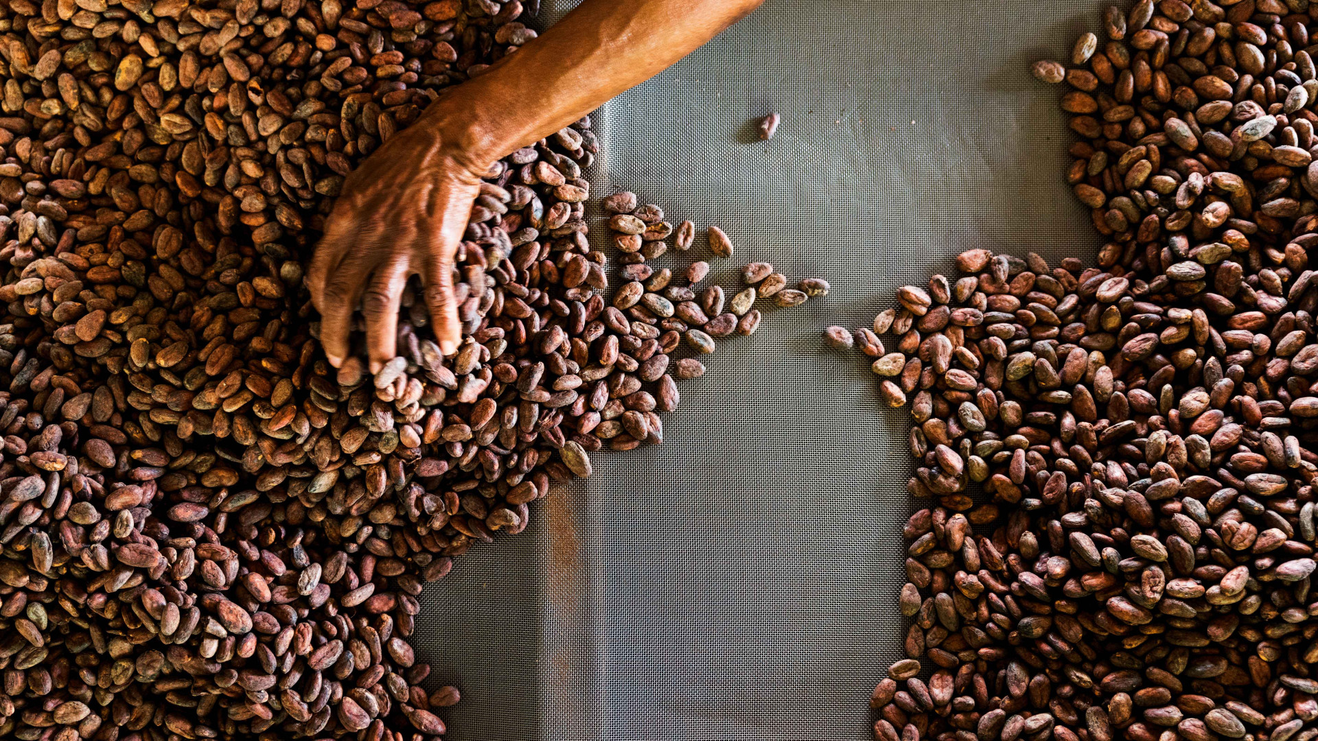 Grenada food and drink: cocoa beans in Grenada
