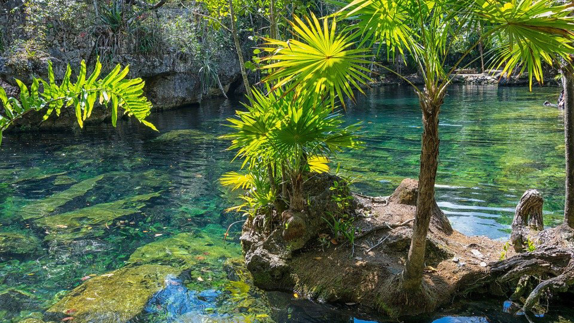 World's Most Awesome Swimming Pools: Cenotes of the Yucátan Peninsula of Mexico