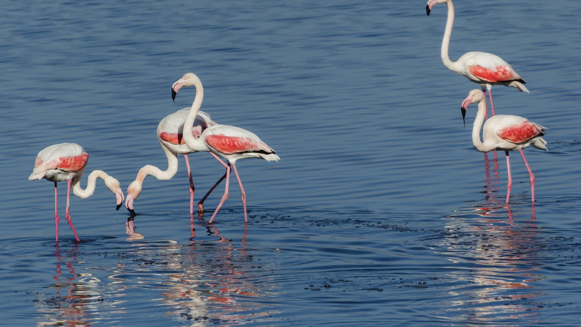 Thrace, Greece | Flamingos on Lake Vistonida