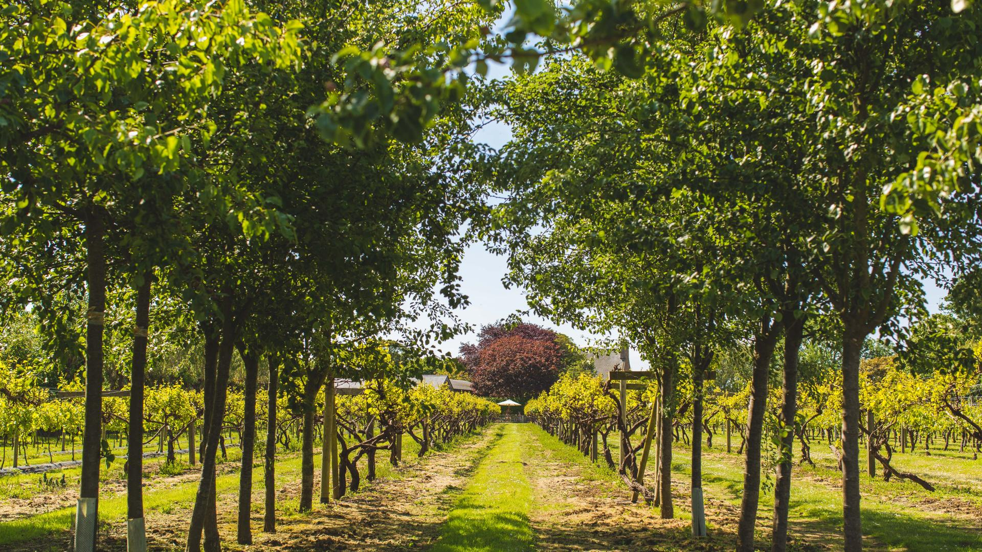 Things to do in Jersey: the vineyard at La Mare