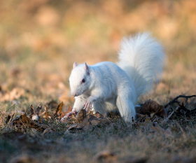 featured-squirrel