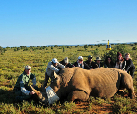 featured-rhino