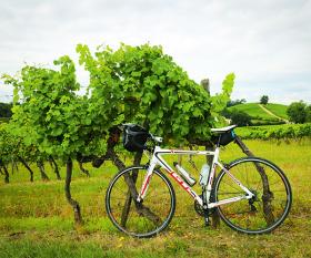 Bike in a vineyard near Bordeaux