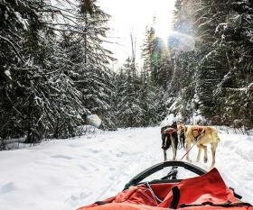 Dog-sledding in Alberta, Canada