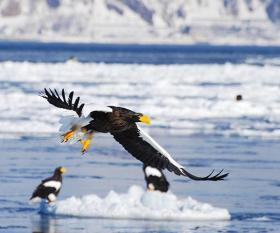 Birdlife in Eastern Hokkaido, Japan