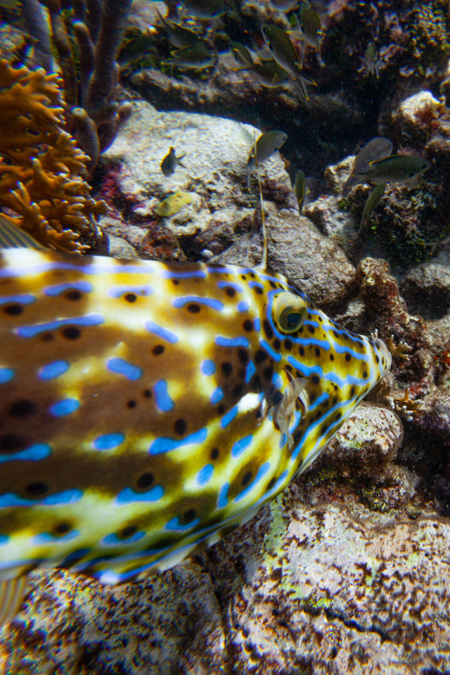 A fish in Tobago Cays, Petit St Vincent