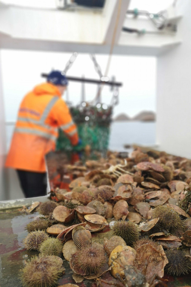 Best food holidays: scallop fishing in Iceland