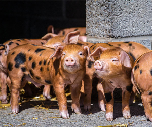 Family farm in Cornwall