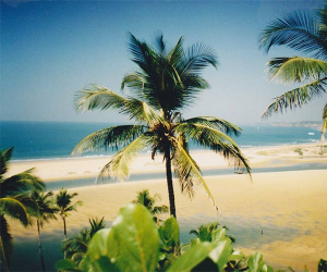 Palms and beach in Goa
