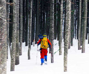 Snowshoeing holidays with Walk Japan