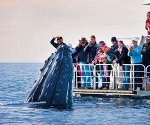 Whale in Brisbane, Australia